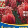 Vrtnarstvo Breskvar - Color Symphony Red Harmony