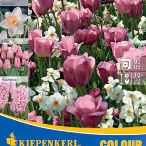 Vrtnarstvo Breskvar - Color Symphony Rose Harmony
