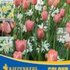 Vrtnarstvo Breskvar - Color Symphony Summer Dreams