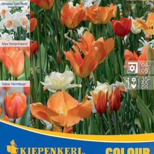 Vrtnarstvo Breskvar - Color Symphony Sunrise Harmony