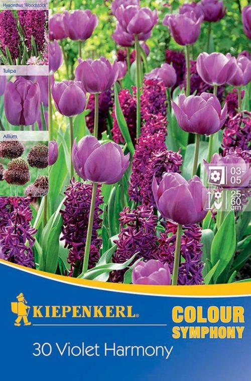 Vrtnarstvo Breskvar - Color Symphony Violet Harmony