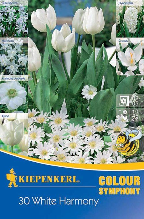 Vrtnarstvo Breskvar - Color Symphony White Harmony