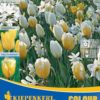 Vrtnarstvo Breskvar - Color Symphony White & Yellow Sensation