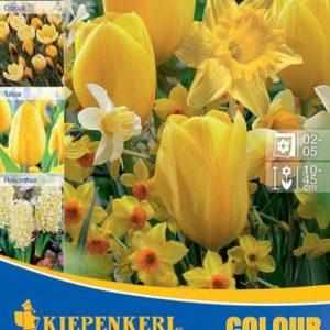Vrtnarstvo Breskvar - Color Symphony Yellow Harmony