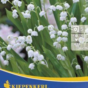 Vrtnarstvo Breskvar - Convallaria Majalis