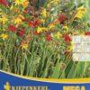 Vrtnarstvo Breskvar - Crocosmia Mix mega pack