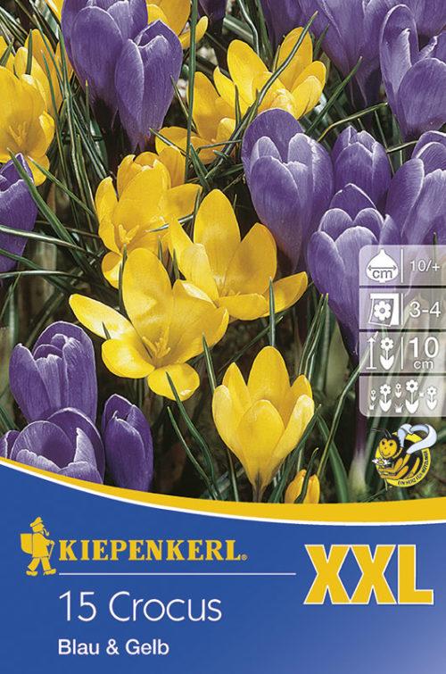 Vrtnarstvo Breskvar - Crocus Blau & Gelb XXL