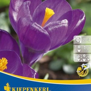 Vrtnarstvo Breskvar - Crocus Flower Record