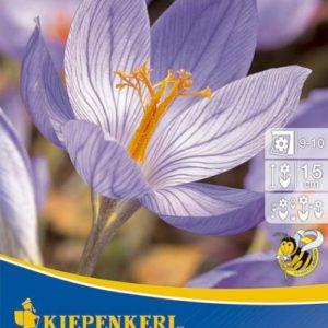 Vrtnarstvo Breskvar - Crocus speciosus