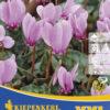 Vrtnarstvo Breskvar - Cyclamen hederifolium XXL