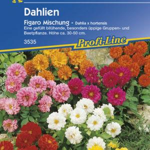 Vrtnarstvo Breskvar - Dahlia Figaro Mix