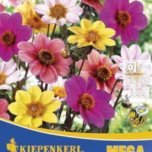 Vrtnarstvo Breskvar - Dahlia Happy Single Mix mega pack