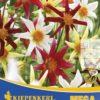 Vrtnarstvo Breskvar - Dahlia Honka Mix mega pack