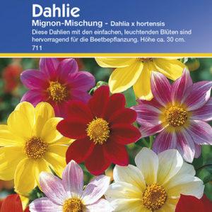 Vrtnarstvo Breskvar - Dahlia Mignon Mix