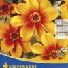 Vrtnarstvo Breskvar - Dahlia Sunshine