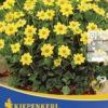 Vrtnarstvo Breskvar - Dahlia Topmix Gelb