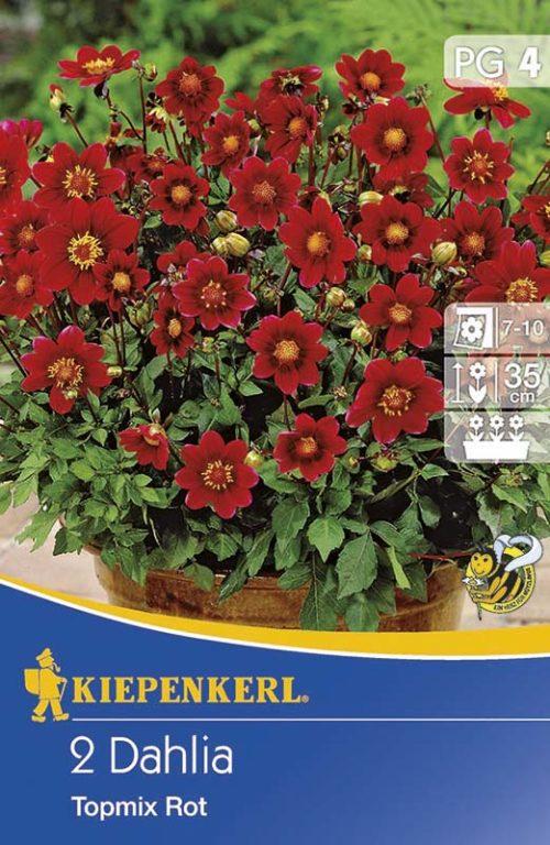 Vrtnarstvo Breskvar - Dahlia Topmix Rot