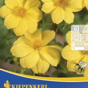 Vrtnarstvo Breskvar - Dahlia Yellow Sneezy