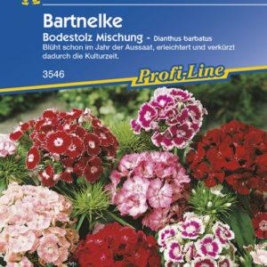 Vrtnarstvo Breskvar - Dianthus barbatus Bodenstolz Mix