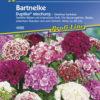 Vrtnarstvo Breskvar - Dianthus barbatus Duplika Mix