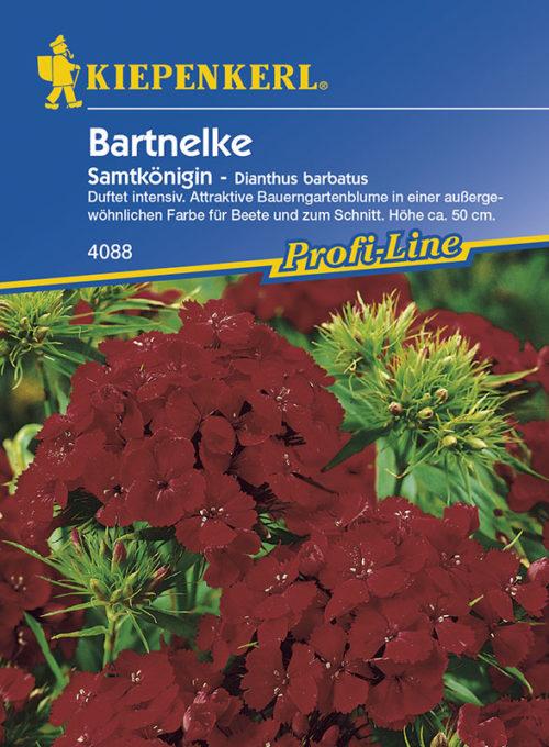 Vrtnarstvo Breskvar - Dianthus barbatus Samtkönigin