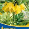 Vrtnarstvo Breskvar - Fritillaria Lutea