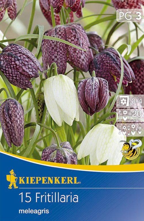 Vrtnarstvo Breskvar - Fritillaria meleagris Mix