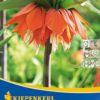 Vrtnarstvo Breskvar - Fritillaria Rubra