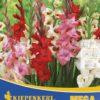 Vrtnarstvo Breskvar - Gladiolus Bambino-Mix mega pack
