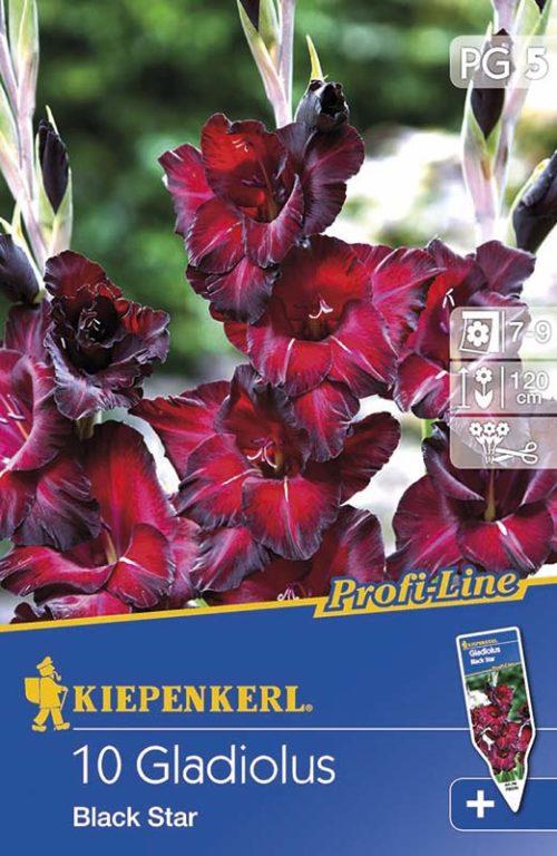 Vrtnarstvo Breskvar - Gladiolus Black Star