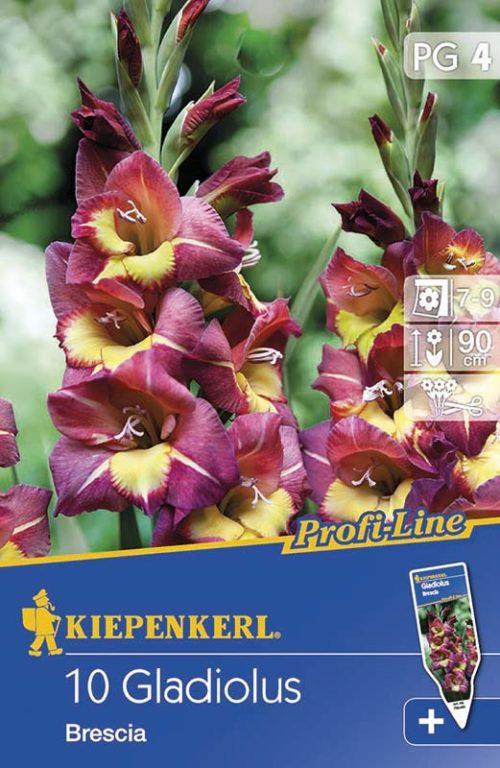 Vrtnarstvo Breskvar - Gladiolus Brescia