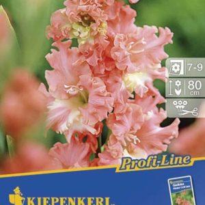Vrtnarstvo Breskvar - Gladiolus Frizzled Coral Lace