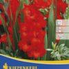 Vrtnarstvo Breskvar - Gladiolus Hunting Song