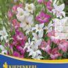 Vrtnarstvo Breskvar - Gladiolus nanus Mix