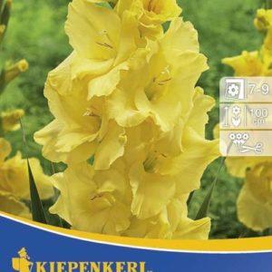 Vrtnarstvo Breskvar - Gladiolus Nova Lux