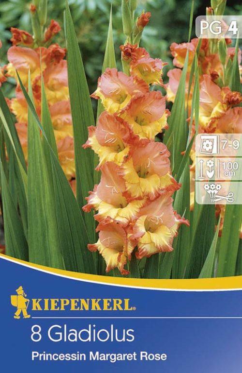 Vrtnarstvo Breskvar - Gladiolus Princessin Margaret Rose