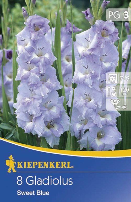 Vrtnarstvo Breskvar - Gladiolus Sweet Blue
