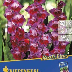 Vrtnarstvo Breskvar - Gladiolus Velvet Eyes