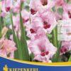 Vrtnarstvo Breskvar - Gladiolus Wine and Roses