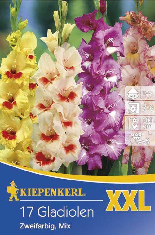 Vrtnarstvo Breskvar - Gladiolus Zweifarbige Mix XXL