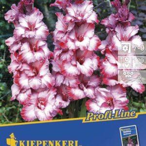 Vrtnarstvo Breskvar - Gladiolus Greyhound