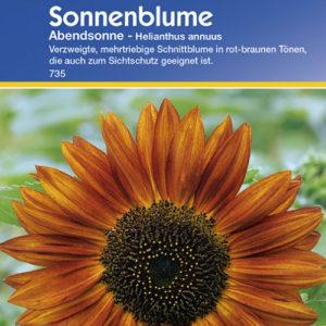 Vrtnarstvo Breskvar - Helianthus annuus Abendsonne