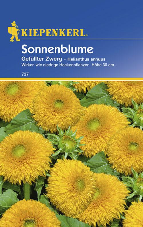Vrtnarstvo Breskvar - Helianthus annuus Gefullter Zwerg