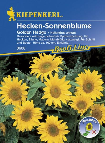 Vrtnarstvo Breskvar - Helianthus annuus Golden Hedge