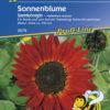Vrtnarstvo Breskvar - Helianthus annuus Samtkönigin