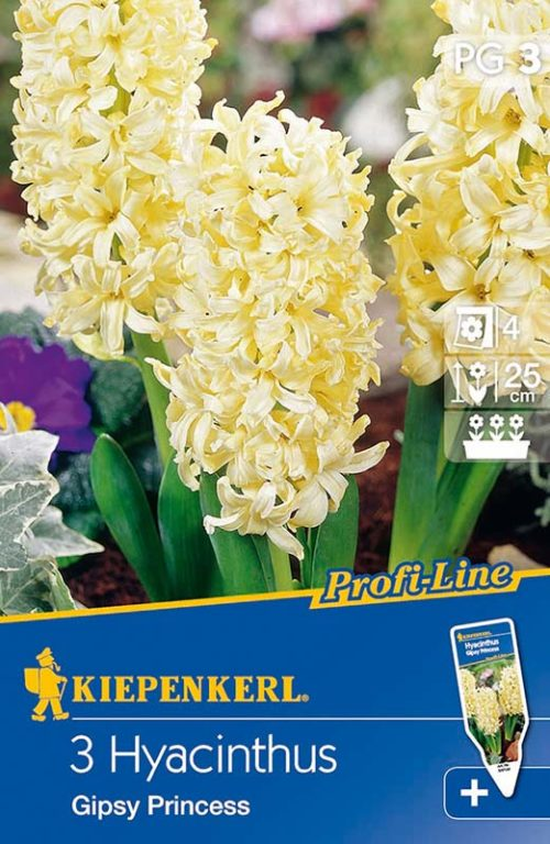 Vrtnarstvo Breskvar - Hyacinthus Gipsy Princess