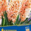 Vrtnarstvo Breskvar - Hyacinthus Gipsy Queen