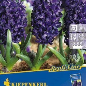 Vrtnarstvo Breskvar - Hyacinthus Pacific Ocean