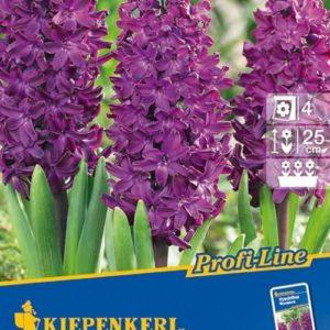 Vrtnarstvo Breskvar - Hyacinthus Woodstock