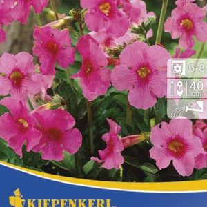 Vrtnarstvo Breskvar - Incarvillea Delavayii Rosa
